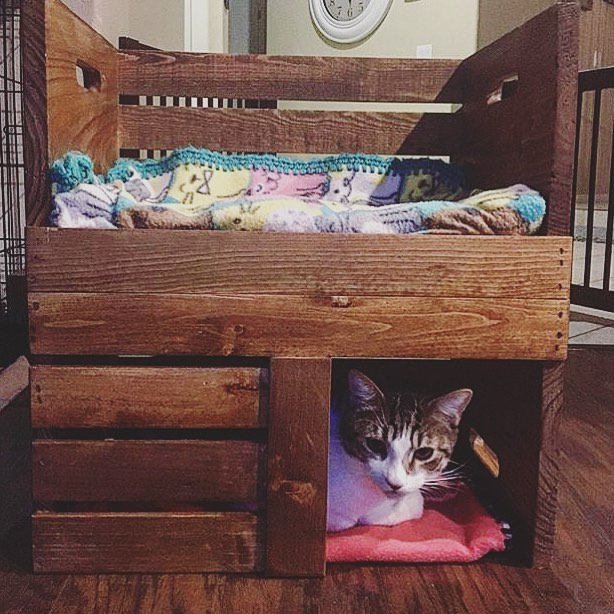 Cat house made of Pallet