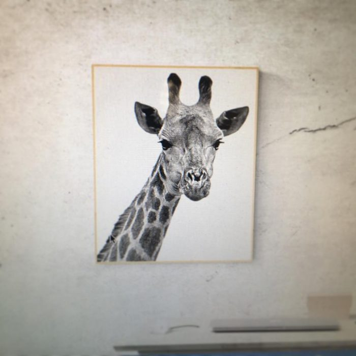 Favorites Animals Photo Frame | Wall Decor Ideas